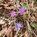 2014-03-15-plitvice-flora-03