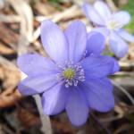 2014-03-15-plitvice-flora-05