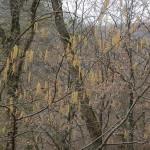 2015-03-14-Belecgrad-05